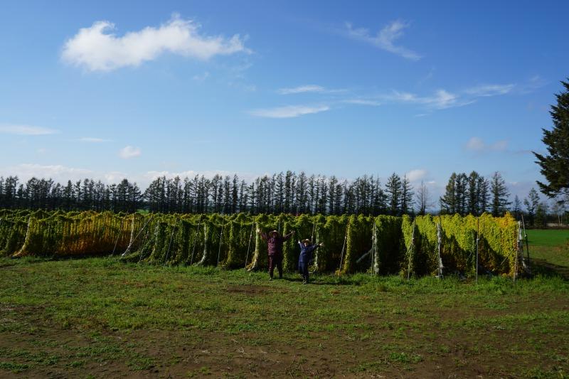 農場ピクニック長いも掘り体験広大な長いも畑